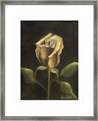 Royal Gold Bud Framed Print by Nancy Edwards