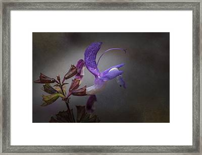 Framed Print featuring the photograph Royal by Jacqui Boonstra