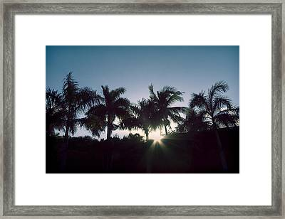 Royal Palm Sunset Framed Print