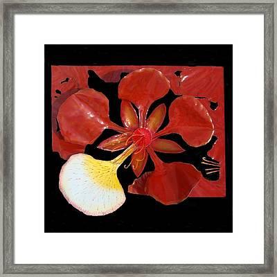 Royal Poinciana Bloom Set In A Bed Of Petals Framed Print
