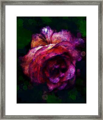 Royal Rose Painted Framed Print