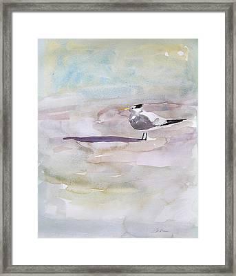 Royal Tern  Framed Print by Julianne Felton