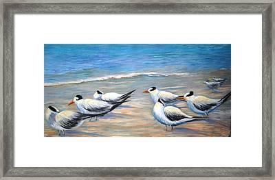 Royal Terns Framed Print by Teresita Hightower