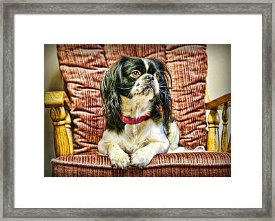 Royalty - Japanese Spaniel Framed Print by Cricket Hackmann
