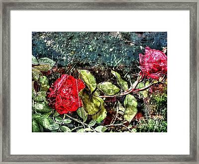 Roze Framed Print by Yury Bashkin