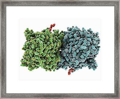 Rpe65 Retinal Pigment Protein Framed Print by Laguna Design