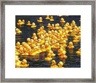 Rubber Duck Race Framed Print by Allen Beatty