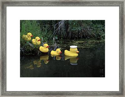 Rubber Ducks In A Row Pond Southcentral Framed Print by Jeff Schultz