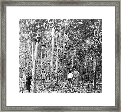 Rubber Tree Plantation Framed Print by Library Of Congress