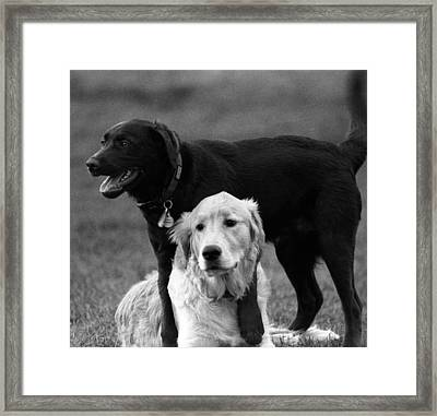 Rubbing Noses Framed Print