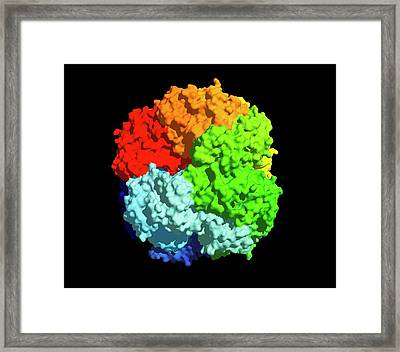 Rubisco Carbon Fixation Enzyme Molecule Framed Print by Dr Tim Evans