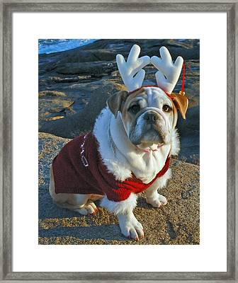 Ruby 11 Framed Print