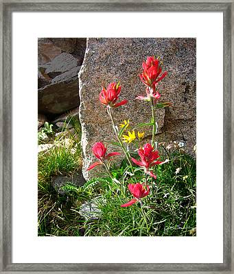 Ruby Jewel Framed Print by Julie Magers Soulen