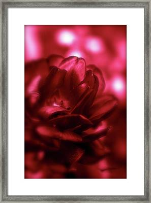 Ruby Red  Dahlia With Bokeh Framed Print