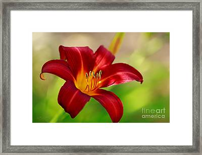 Ruby Red Framed Print by Beve Brown-Clark Photography