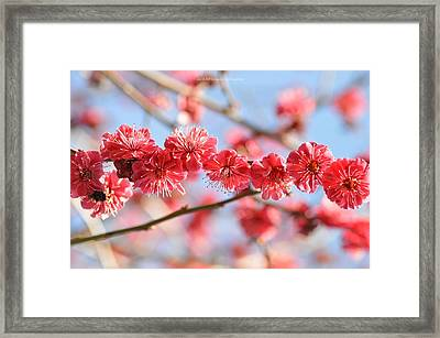 Ruby Studded Framed Print
