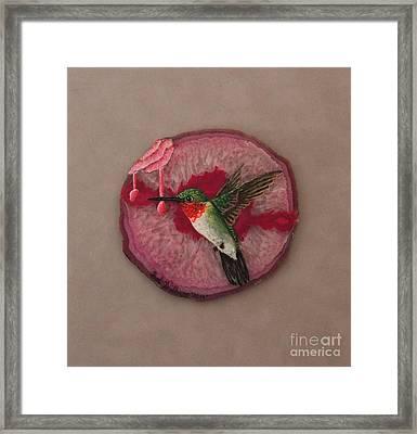 Ruby Throated Hummer Framed Print