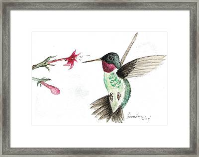 Ruby Throated Hummingbird Framed Print by Brenda Ruark