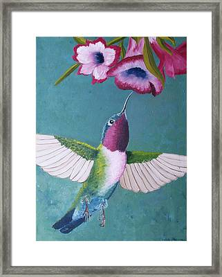 Ruby-throated Hummingbird Framed Print by Cecilia Stevens