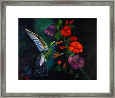 Rubythroated Humming Bird And Hibiscus Framed Print