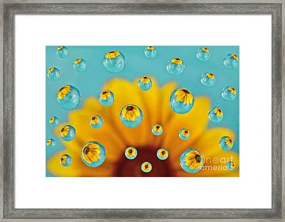 Rudbeckia Explosion Framed Print