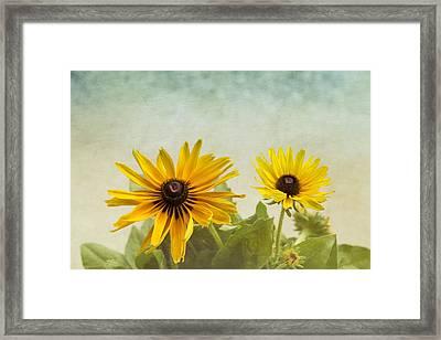 Rudbeckia Flowers Framed Print