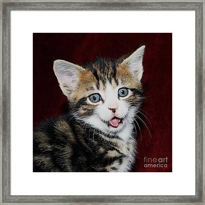 Framed Print featuring the photograph Rude Kitten by Terri Waters