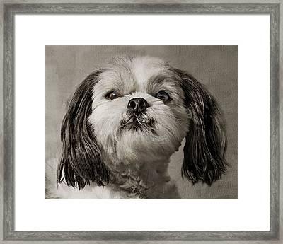 Rudy Framed Print by Nikolyn McDonald