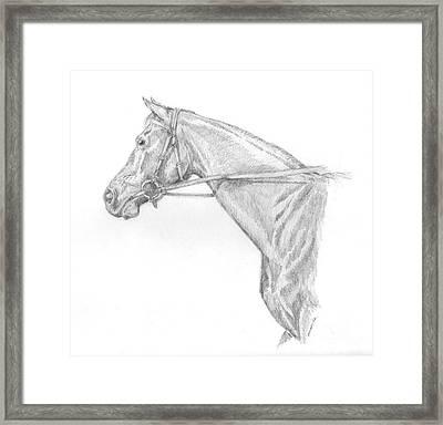 Ruffian  Framed Print by Sue Bonnar