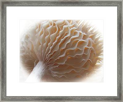 Ruffled And Pretty Or Is It  Pretty Ruffled ?  Framed Print by Tina M Wenger