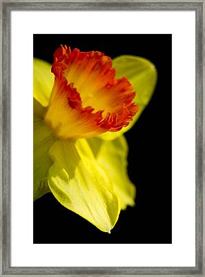 Ruffled Cup Framed Print