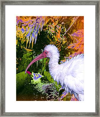 Ruffled Feathers Framed Print by Doris Wood