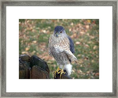 Framed Print featuring the photograph Ruffled Feathers by Teresa Schomig