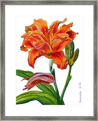 Ruffled Orange Daylily - Hemerocallis Framed Print by Janet  Zeh