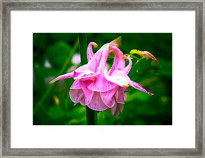 Ruffled Skirts Framed Print by Brian Gibson