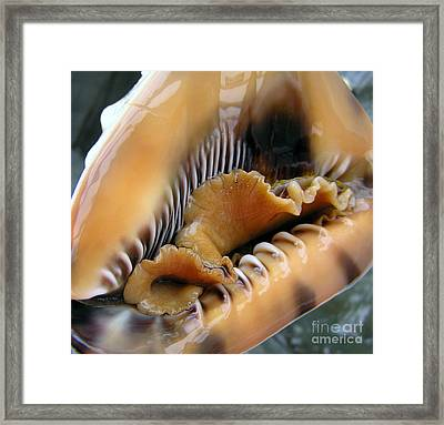 Ruffles Have Ridges Framed Print by Li Newton