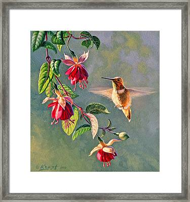 Rufous And Fuschia Framed Print by Paul Krapf