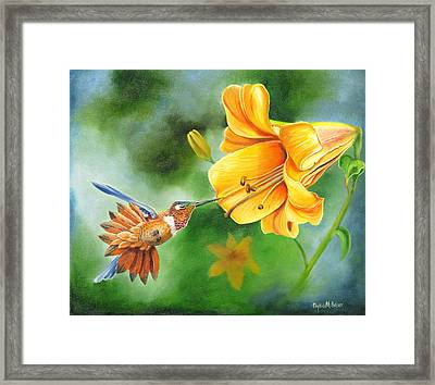 Rufous Hummer And The Lily Framed Print by Phyllis Beiser