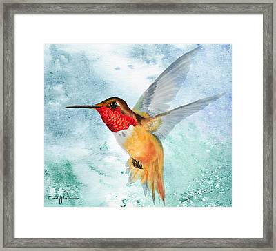 Da199 Rufous Humming Bird By Daniel Adams Framed Print
