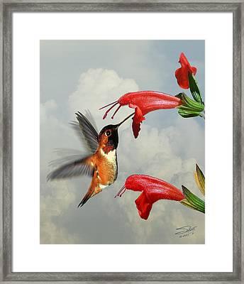 Rufous Hummingbird And Wild Flower Framed Print