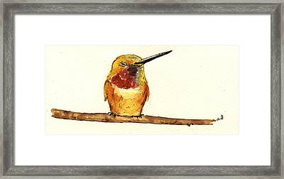 Rufous Hummingbird  Framed Print by Juan  Bosco