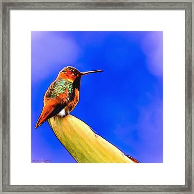 Rufous Hummingbird Painting Framed Print