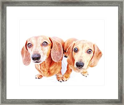 Rufus And Milo Heart  Framed Print
