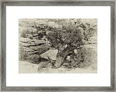 Rugged Tree Framed Print