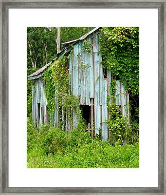 Ruin In The Woods Framed Print
