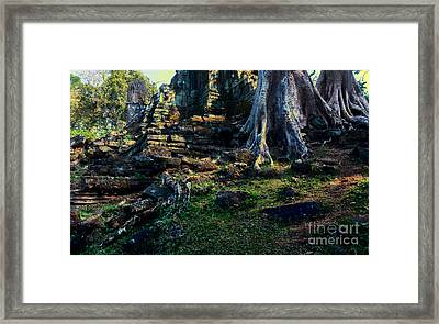 Ruins And Roots Framed Print