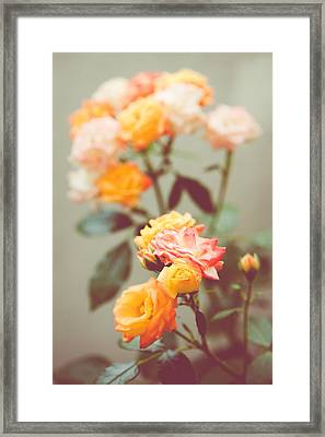 Framed Print featuring the photograph Rumba Rose by Ari Salmela