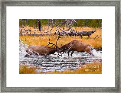 Rumble In The River Framed Print by Aaron Whittemore