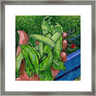 Rummenie's Snap Peas Framed Print by Phil Strang