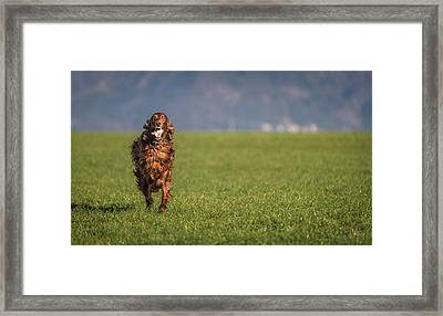 Run Allegro Run Framed Print by Robert Krajnc